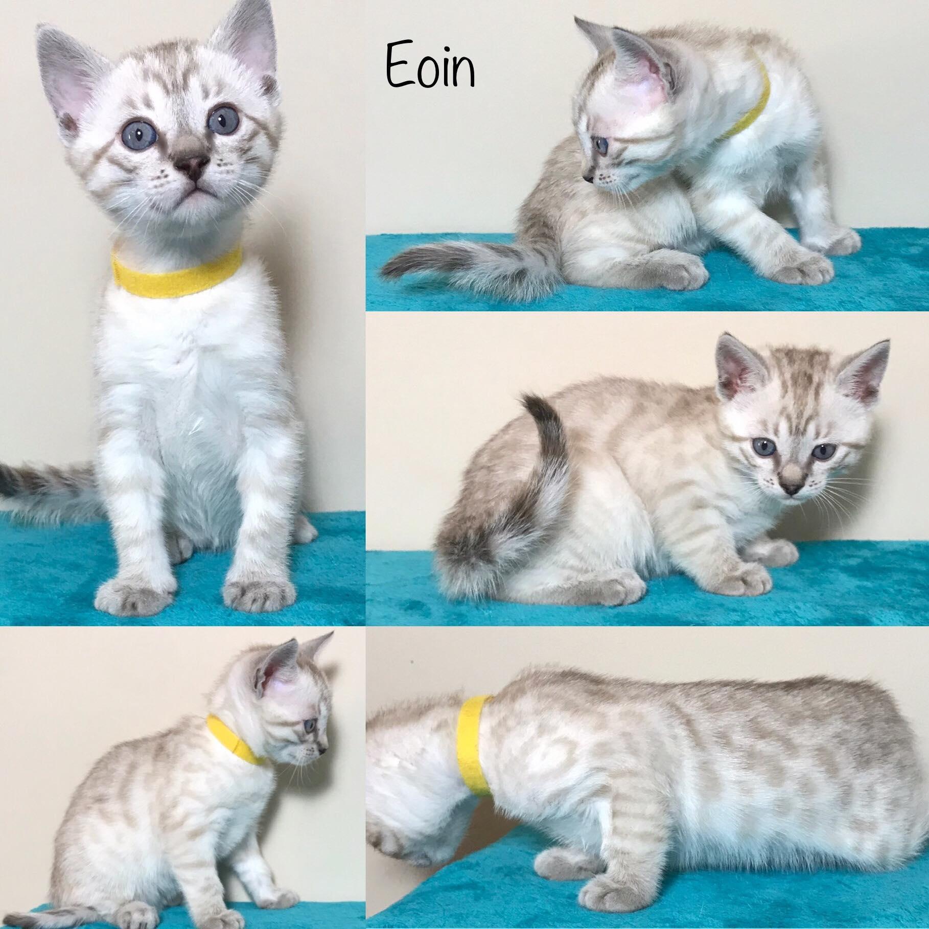 Eoin 6 weeks
