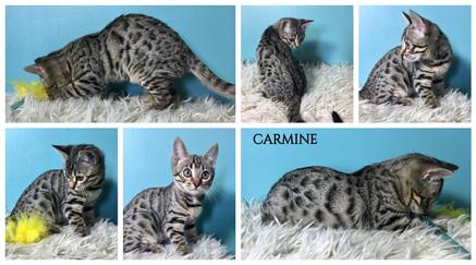 Carmine 12 weeks.jpg