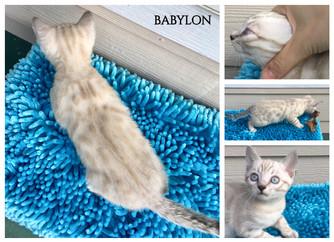 Babylon 7 weeks.jpg