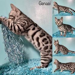 Genasi 11 weeks