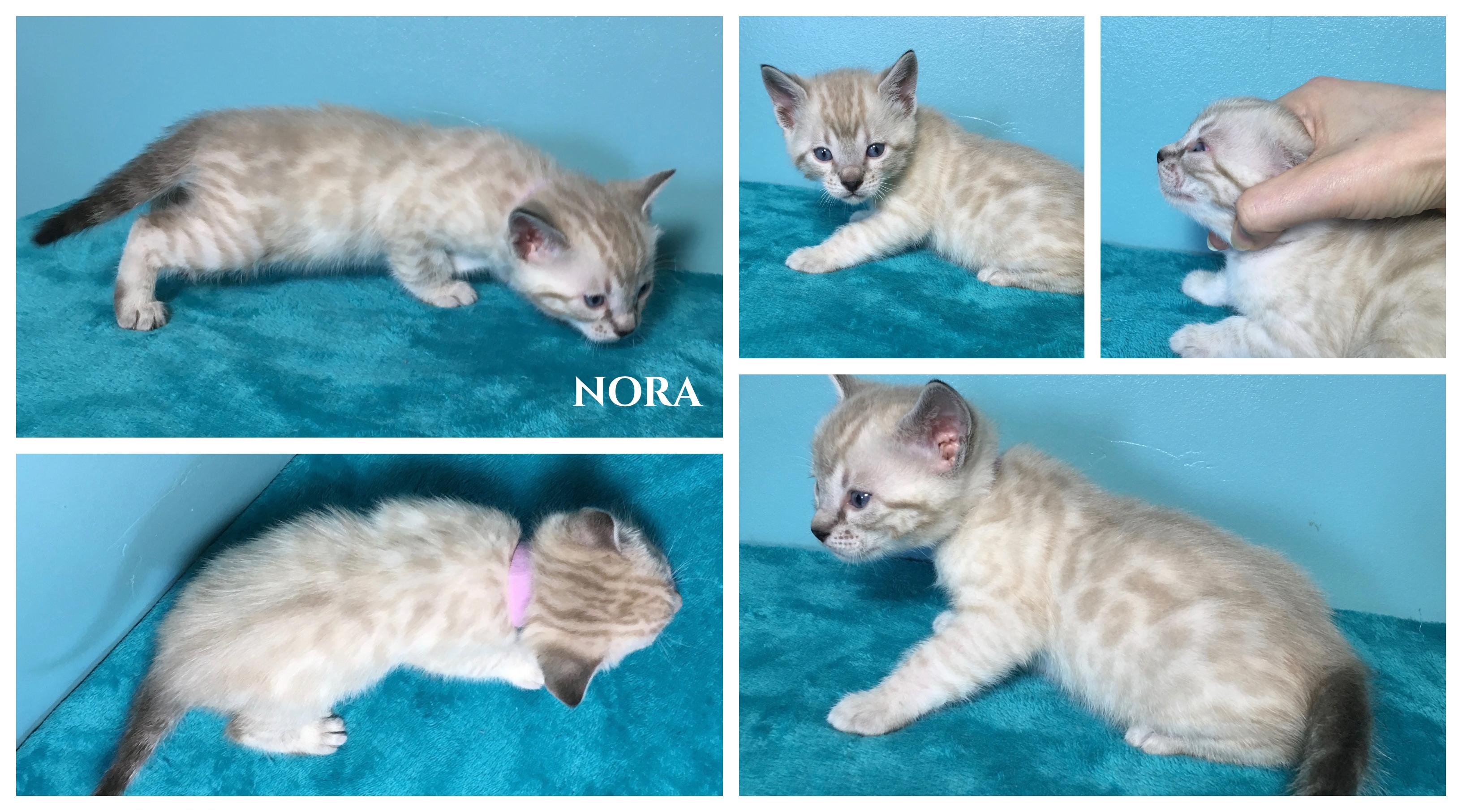 Nora 4 weeks