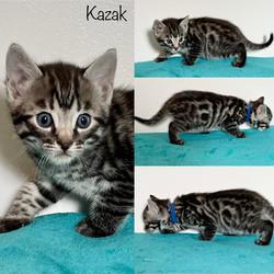 Kazak 5 weeks