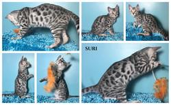 Suri 13 weeks