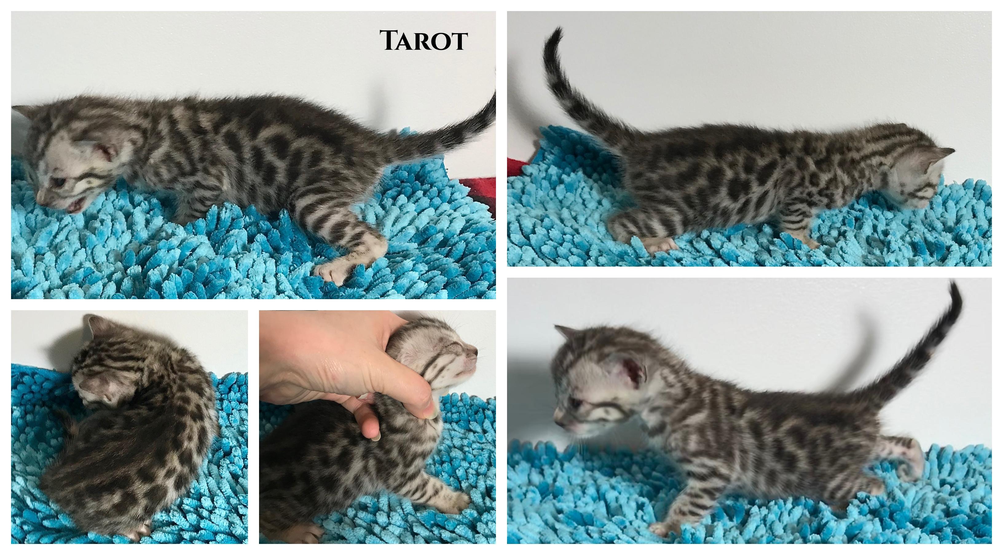 Tarot 3 weeks