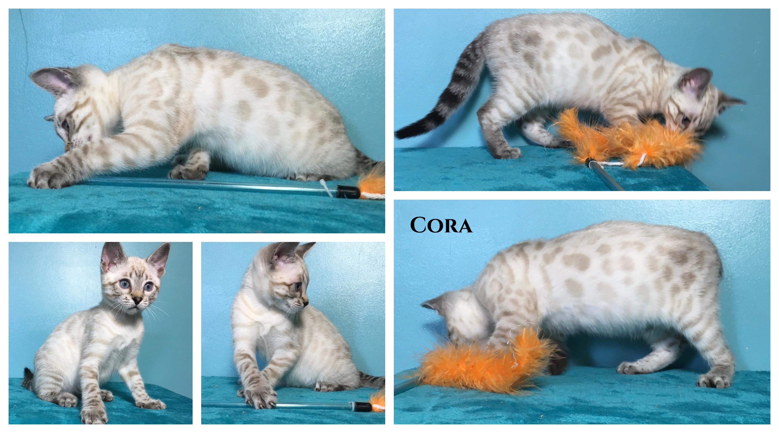 Cora 11 weeks