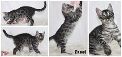 Razoul 9 weeks