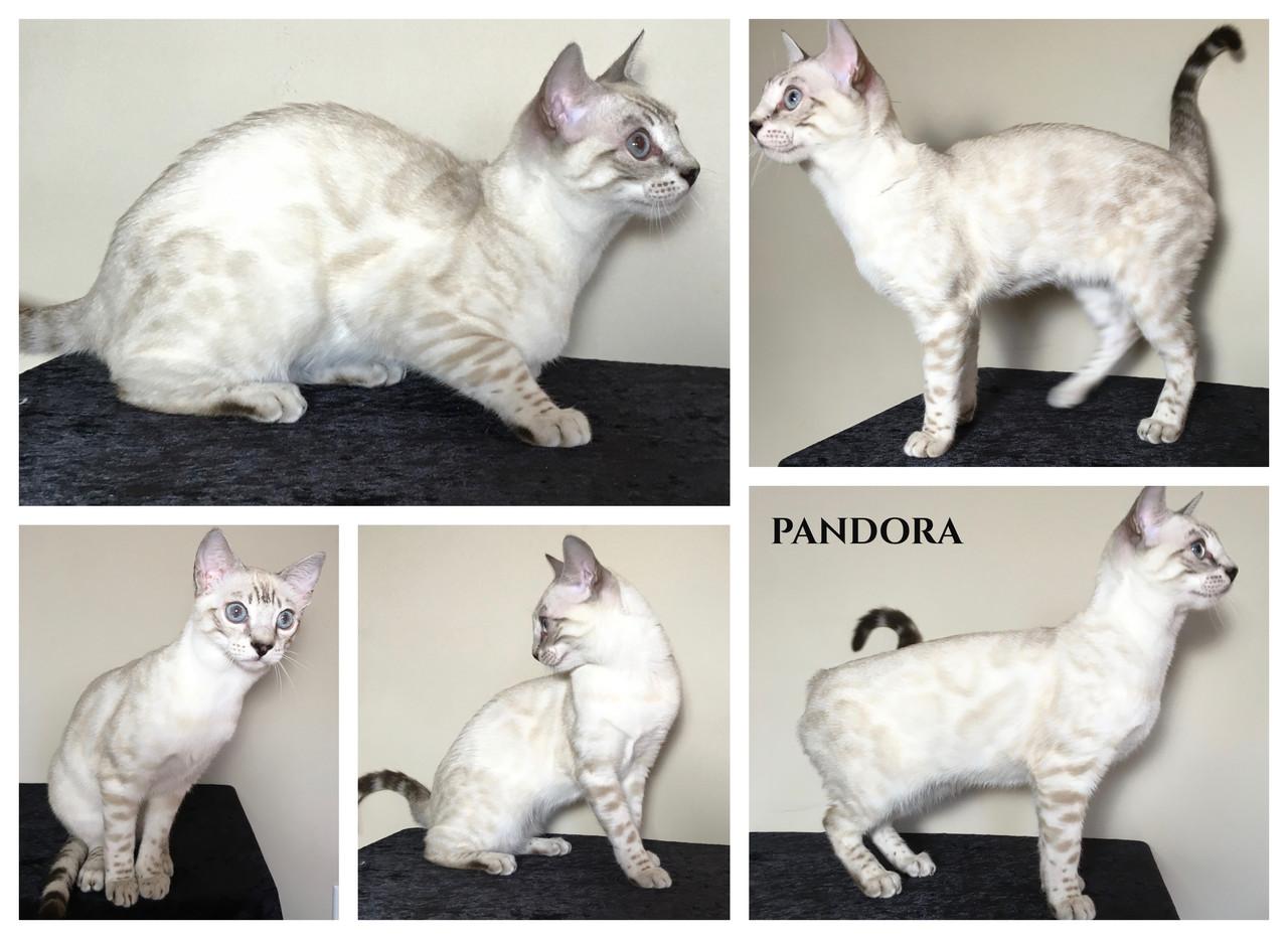 Pandora 23 weeks.jpg