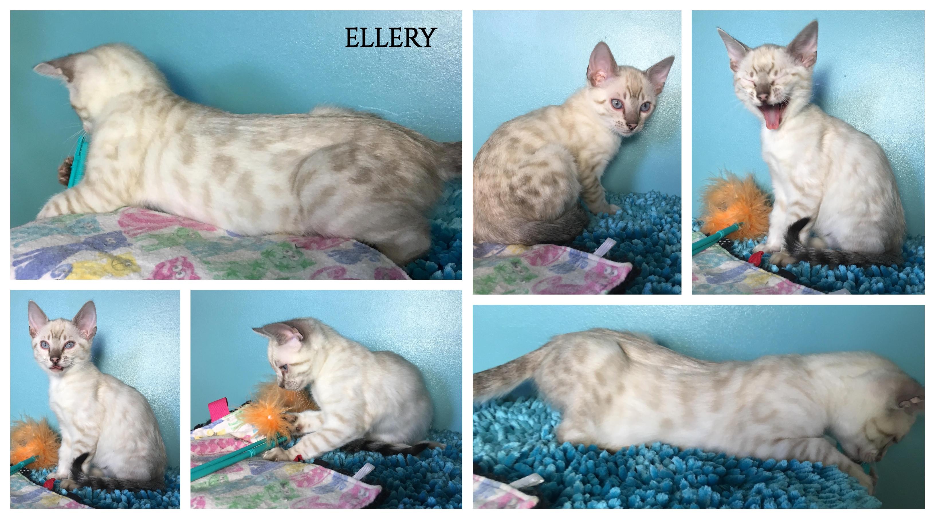 Ellery 10 weeks