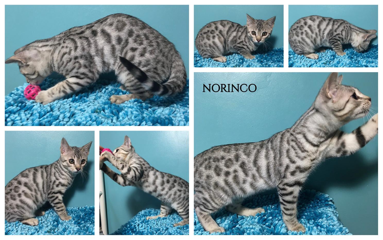 Norinco 18 weeks.jpg