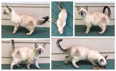 Krill 14 weeks.jpg