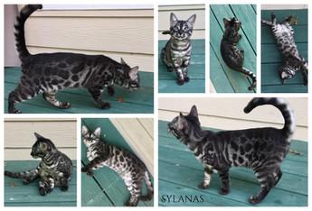 Sylanas 17 weeks.jpg