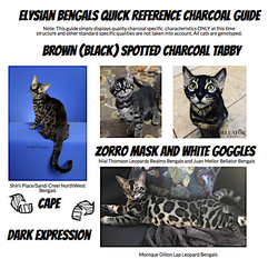 Brown (Black) Spotted Charcoal Tabby