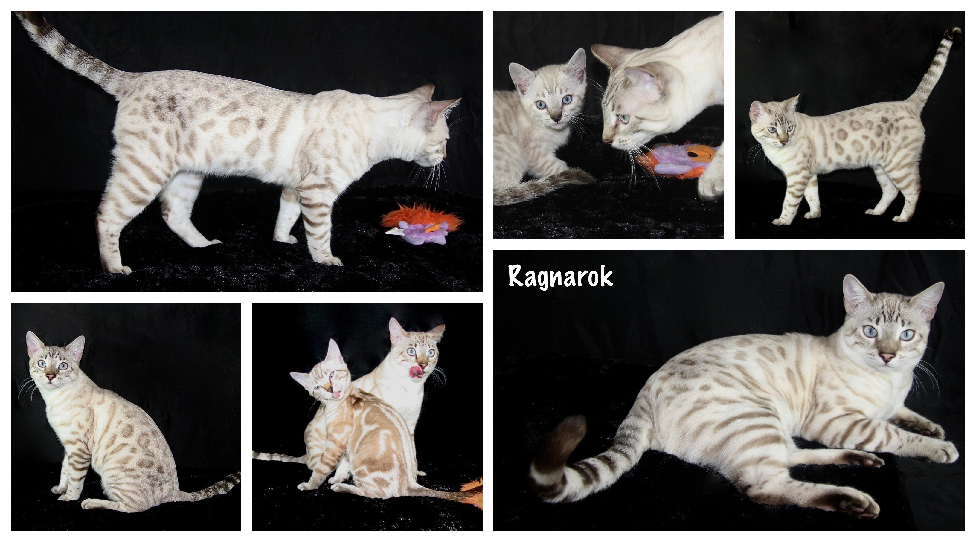 Ragnarok 7 months