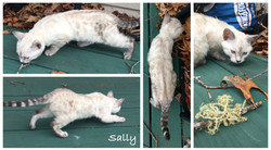 Sally 12 weeks