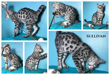 Sullivan 21 weeks.jpg