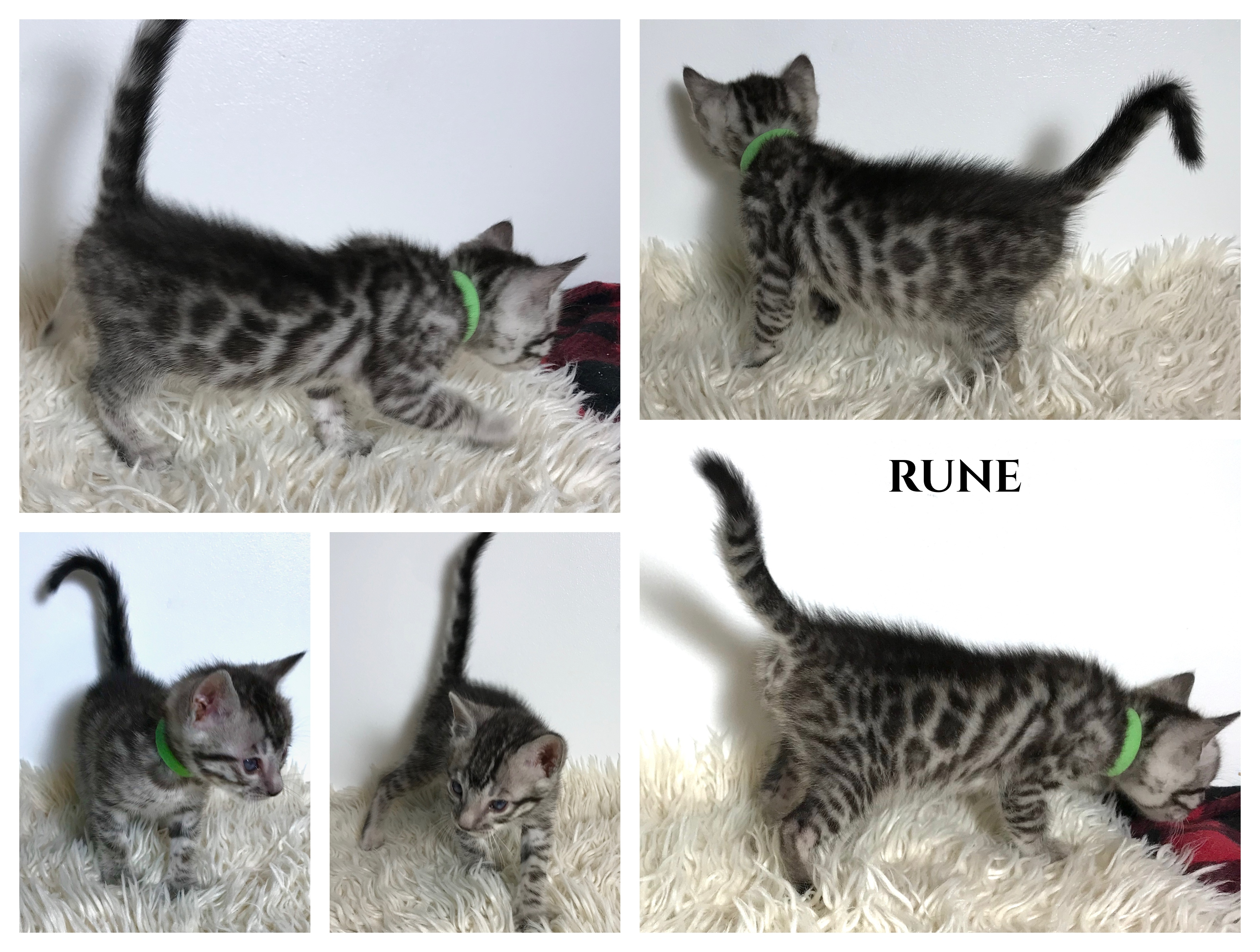 Rune 5 weeks