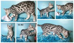 Suri 16 weeks