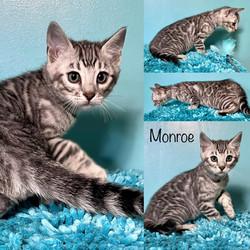 Monroe 8 weeks