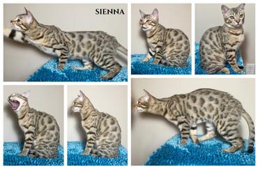 Sienna 24 weeks.jpg