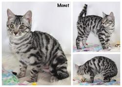 Monet 15 weeks