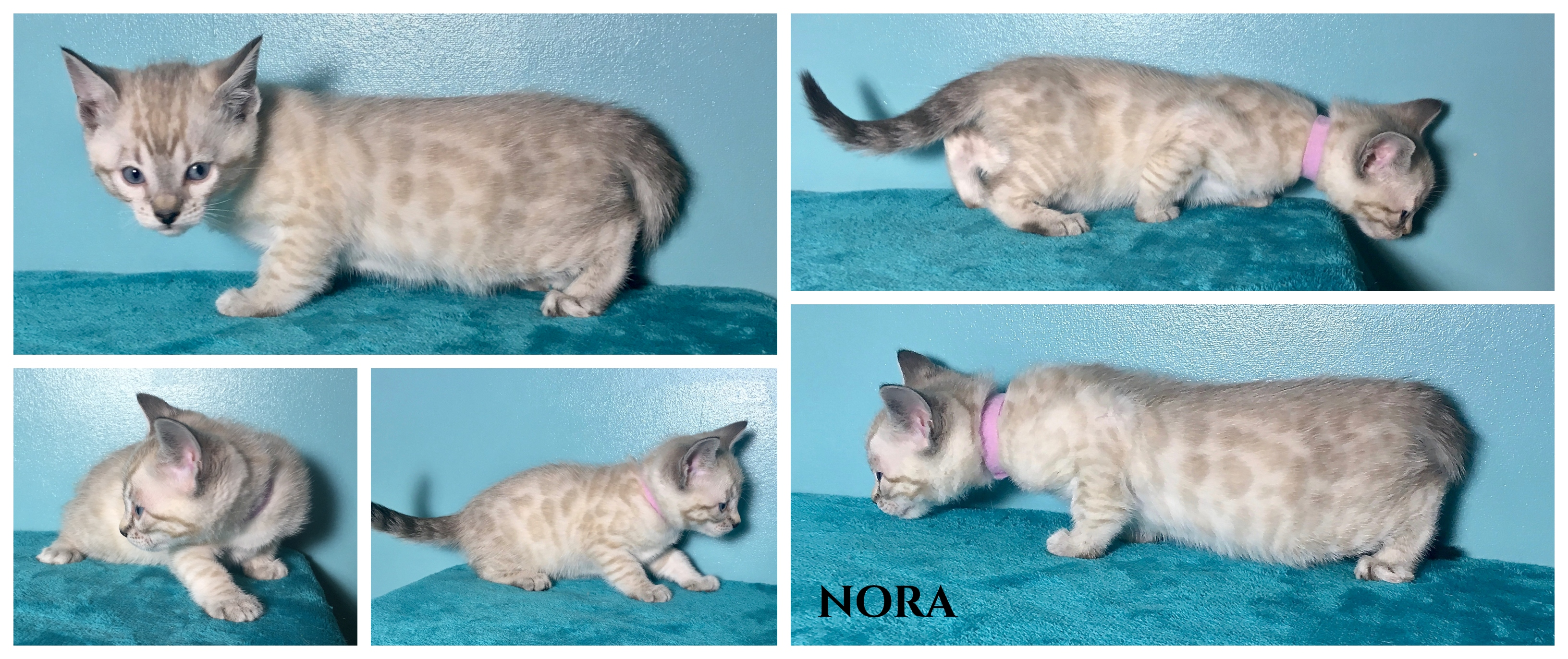 Nora 6 weeks