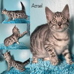 Azrael 10 weeks