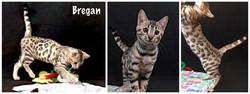 Bregan 14 weeks