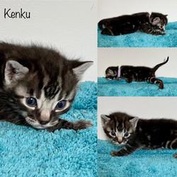 Kenku 3 weeks