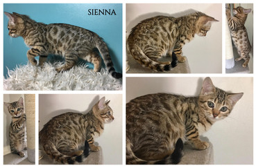 Sienna 12 weeks.jpg