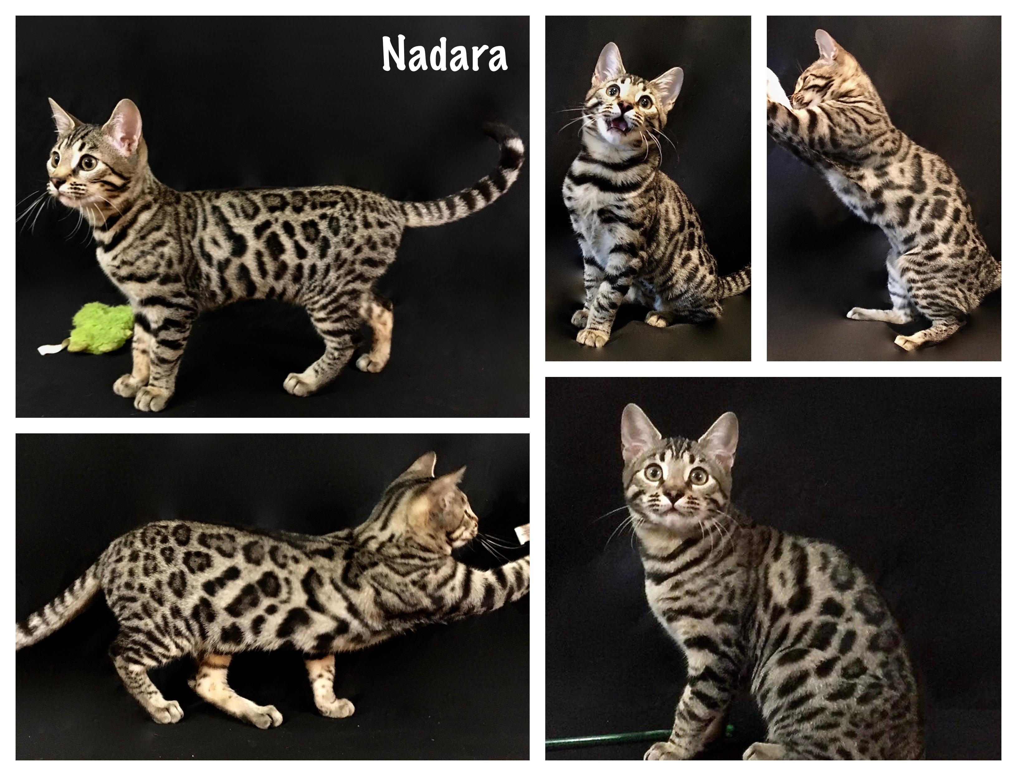 Nadara 16 weeks