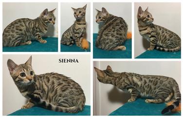 Sienna 19 weeks.jpg