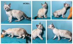 Nora 12 weeks