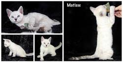 Matisse 8 weeks