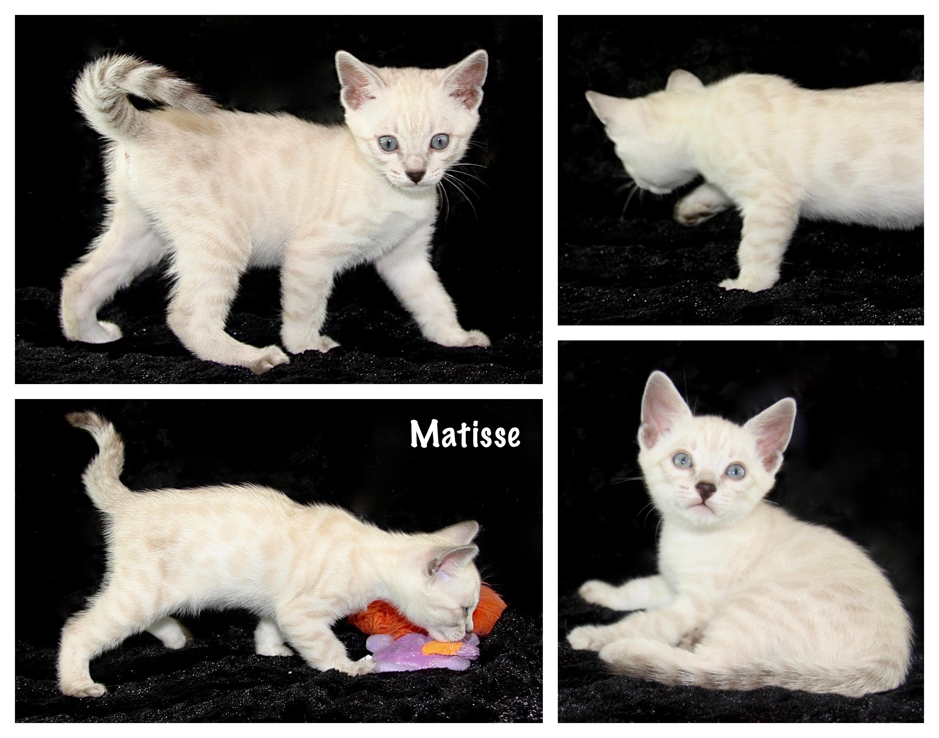Matisse 7 weeks