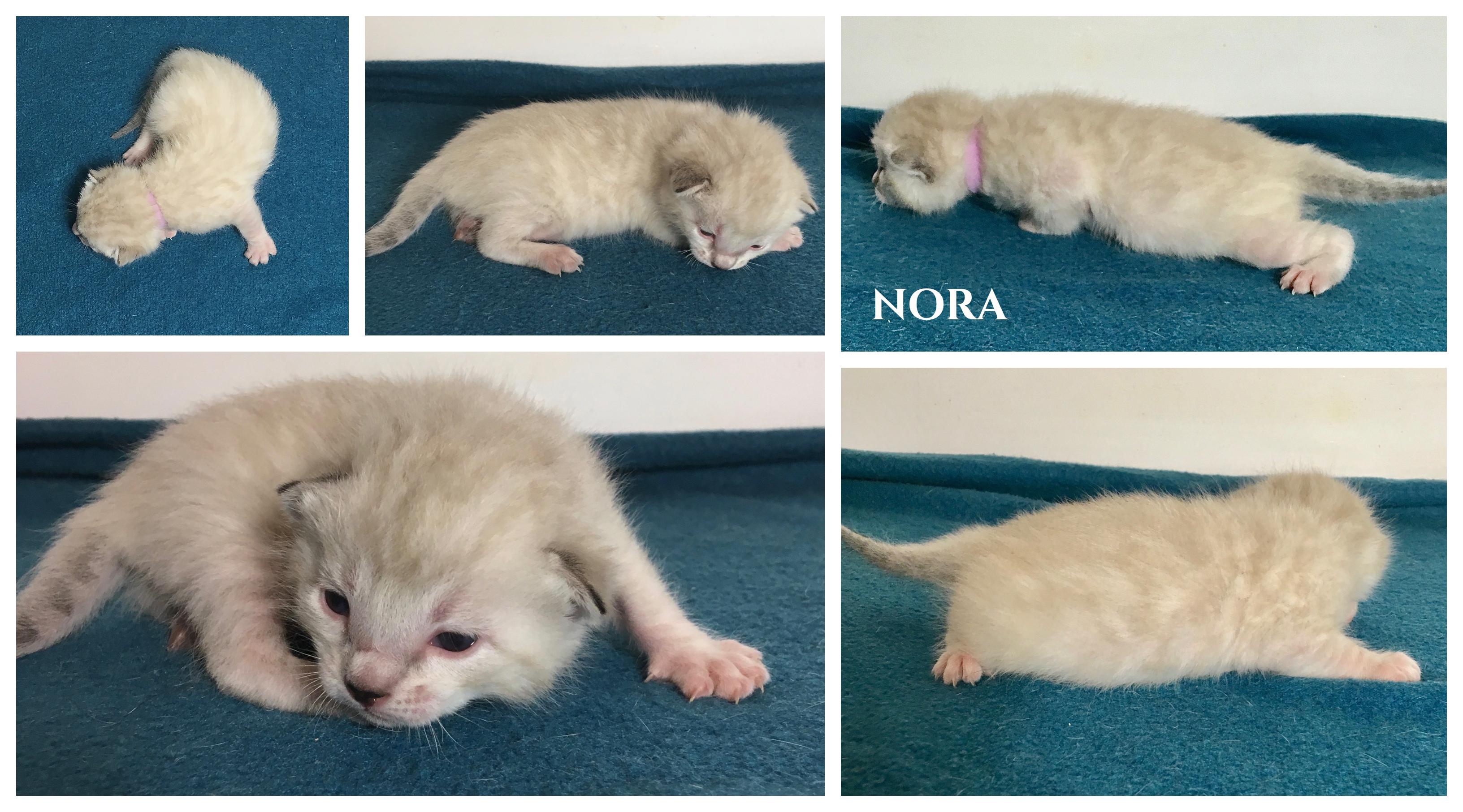 Nora 2 weeks