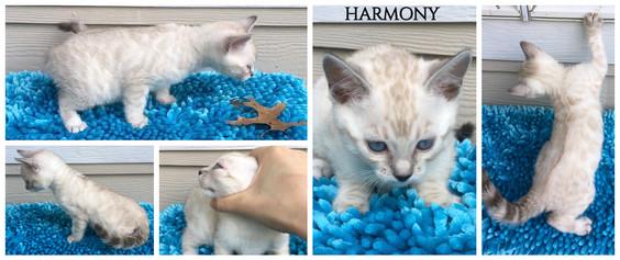 Harmony 7 weeks.jpg