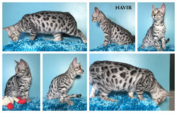 Navir 15 weeks