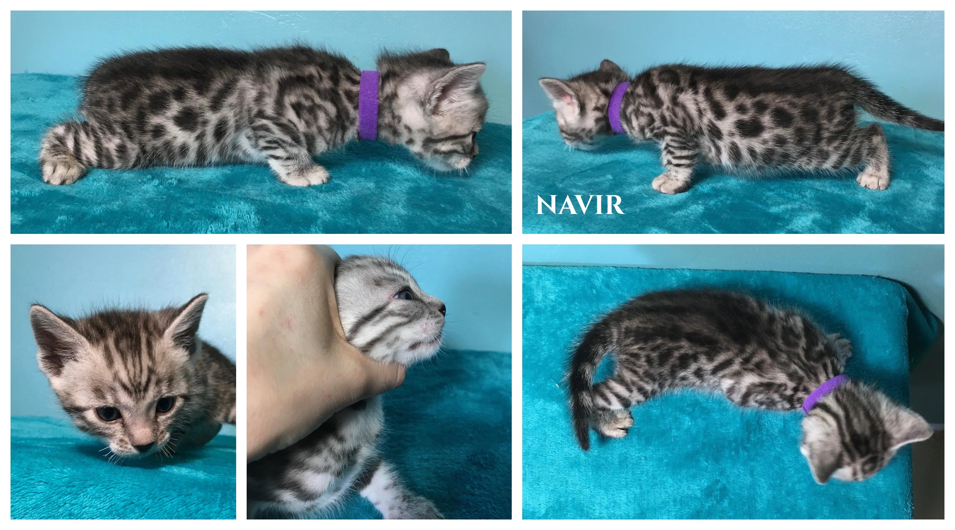 Navir 4 weeks
