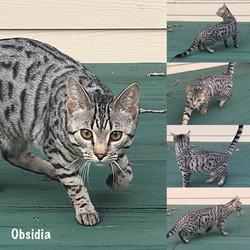 Obsidia 6 months