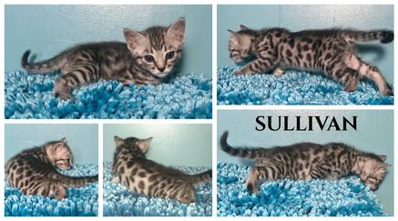 Sullivan 4 weeks.jpg