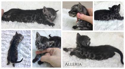 Alleria 3 weeks