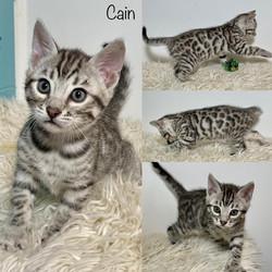 Cain 7 weeks