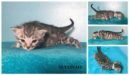 Sullivan 2 weeks.jpg