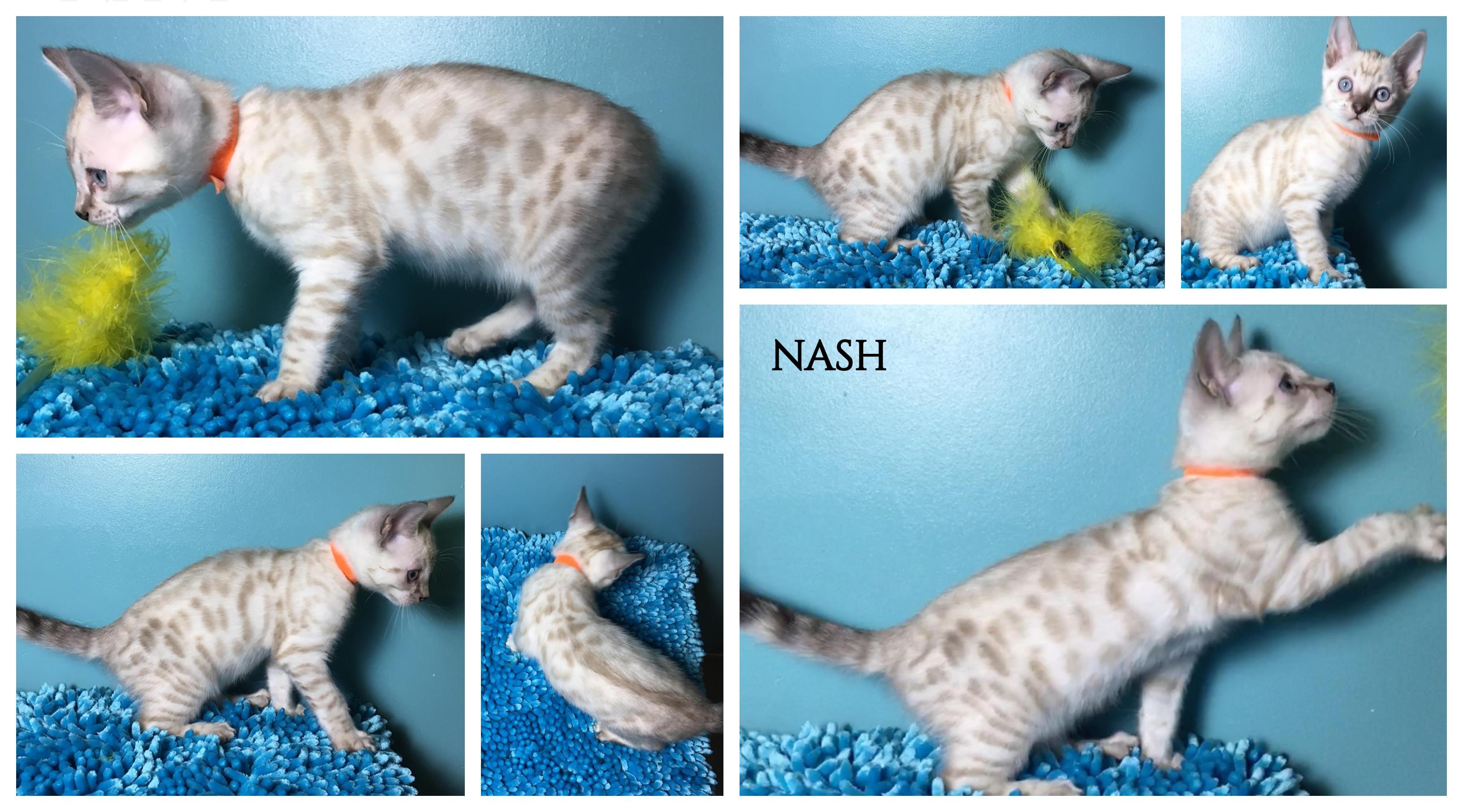 Nash 9 weeks