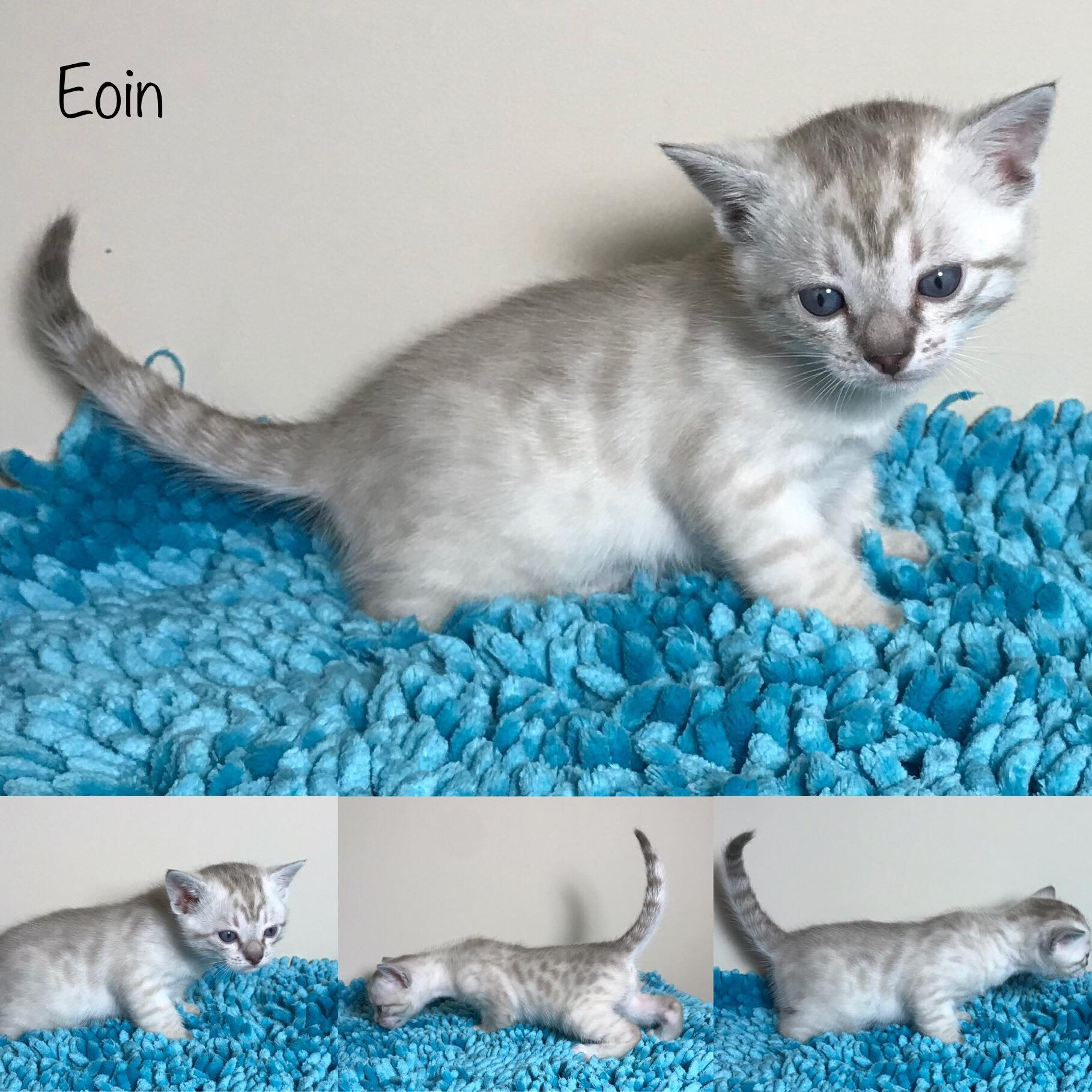 Eoin 4 weeks