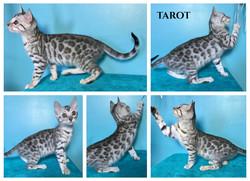 Tarot 10 weeks