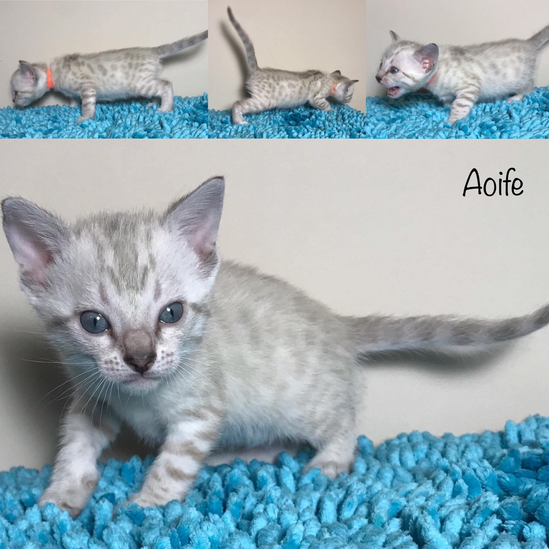 Aoife 4 weeks