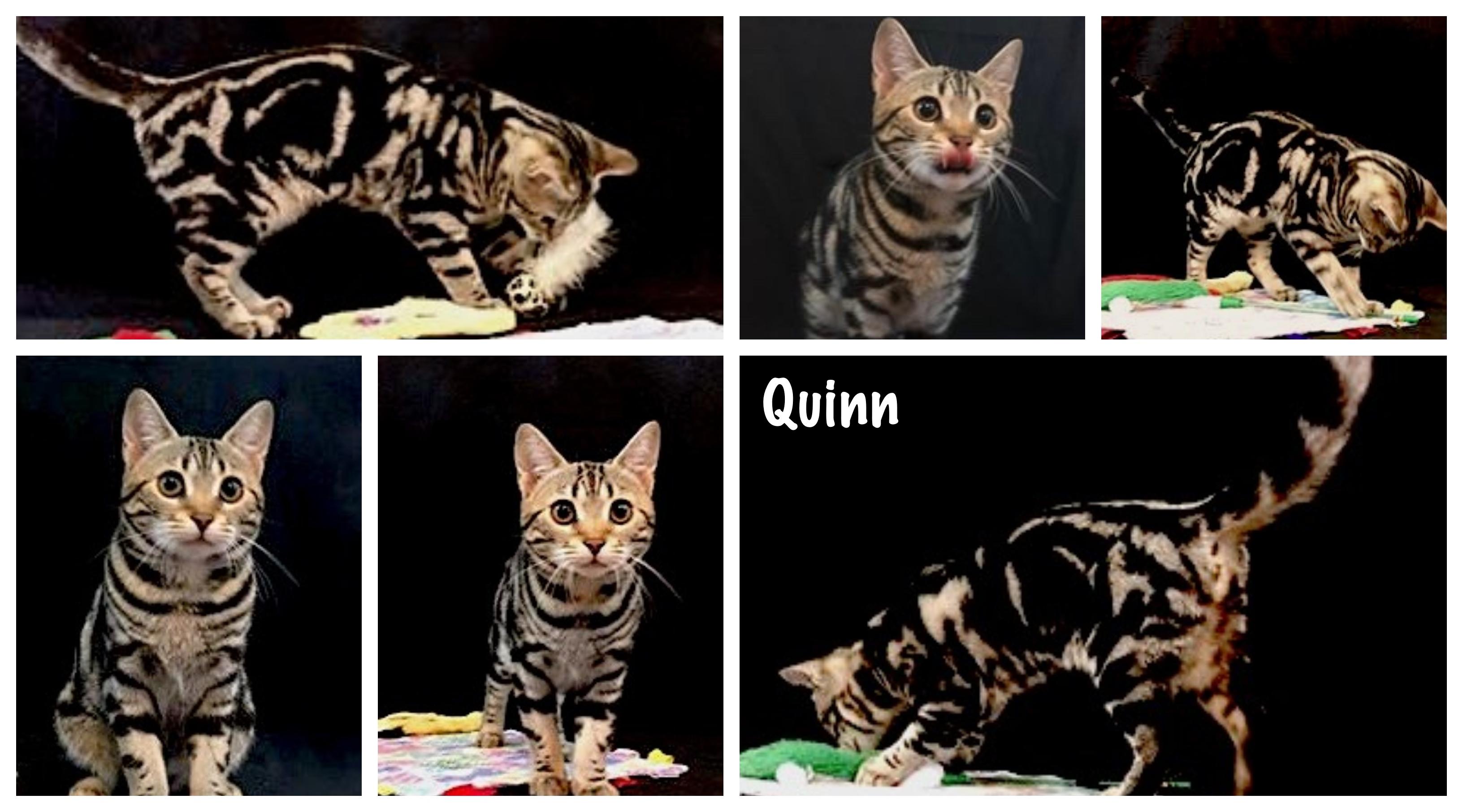Quinn 20 weeks