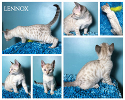 Lennox 9 weeks