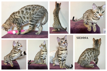 Sienna 23 weeks.jpg